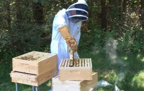 Junior William Holtz beekeeping at his house in Michigan. Photo courtesy of William Holtz.