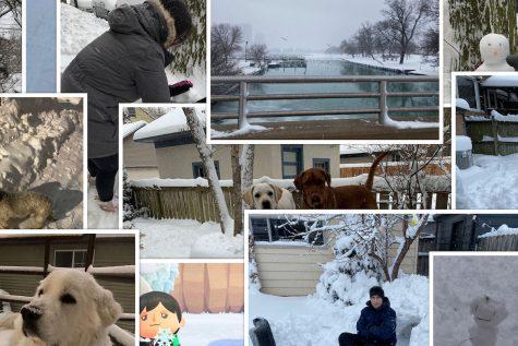 Snowfall Showcase collage.